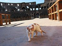 """""""My Roman holiday."""" - -  Cat gladiator.  Taken at Colosseum in Rome."""