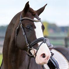 Liver Chestnut Horse Black English Bridle Dressage