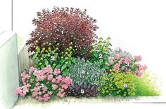 1) пузыреплодник калинолистный (Physocarpus opulifolius) 'Diabolo'. 2)желтые цветки зопника Рассела (Phlomis russeliana, 2x3 экз.) 3)почвопокровная роза 'Fortuna' 4)соцветия шалфея дубравного 5)Темные листья гейхеры гибридного 6) цветки кореопсиса мутовчатого