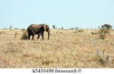 African veldt clipart - Google Search Elephant, Clip Art, African, Google Search, Animals, Animales, Animaux, Elephants, Animal