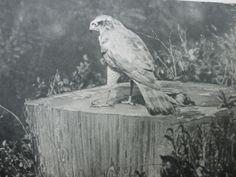 Darstellung aus einem Werk von Hermann Löns Painting, Art, Art Background, Painting Art, Kunst, Paintings, Performing Arts, Painted Canvas, Drawings