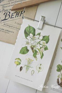 Fröken Knopp : Verandaliv, äppelblom och pelargoner....!!! Bebe'!!! Great vintage botanical prints!!!