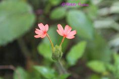 Great joys of Small Flowers   ahometherapist
