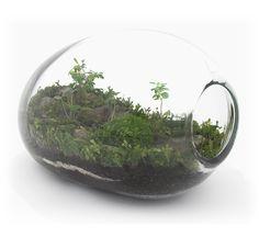 http://jeffrey-james-accessories-terrariums.blogspot.com/2012/12/bonsai-terrarium.html