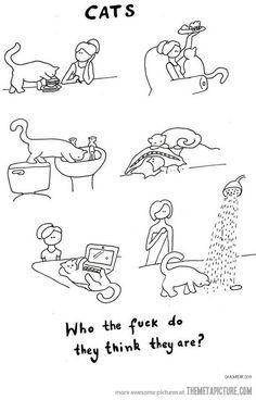 16 herkenbare situaties voor katteneigenaren - Girlscene