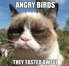 new grumpy cat pictures | Grumpy Cat 03 8 New Grumpy Cat Memes
