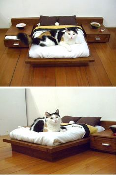 A platform bed for our cats complete with night stands. Perfect for the crazy cat lover in your life.