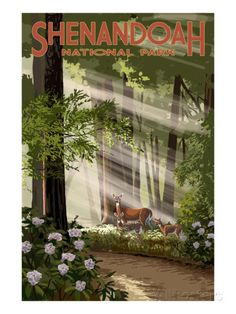 Shenandoah National Park, Virginia - Deer and Fawns Prints by Lantern Press at AllPosters.com