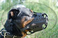 New Hard Dogs Working #Muzzle - $59.90 | www.fordogtrainers.com