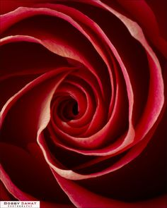 red rose spiral~ The spiral of sacred geometry. Beautiful Gardens, Beautiful Flowers, Spirals In Nature, Divine Proportion, Fibonacci Spiral, Fractal Art, Fractals, Colorful Roses, Golden Ratio