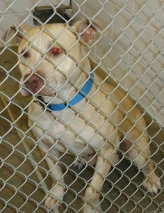 If interested in adopting a pet you will need to fill out a request to adopt. This needs to be on file overnight before you are able to adopt. The adoption fee is $20 and there is a deposit required on any animal that is not spayed/neutered. Your...