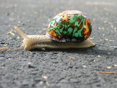 who the hell is edward gains?: snail graffiti. Not sure if this is cool or cruel...