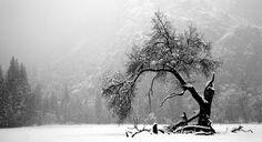 https://flic.kr/p/9AqKef | lone tree
