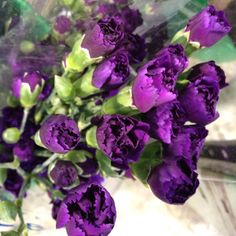 Deep Purple Carnations