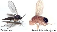 Get Rid of Fruit Flies & Gnats in the Kitchen Fast, Easy, & Natural ...