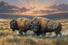 Dusty Plains- Bison Canvas by Rosemary Millette