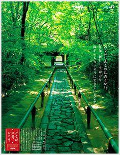 Daitoku-ji Koto-in / 大徳寺 高桐院