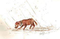 wet dog chien mouillé