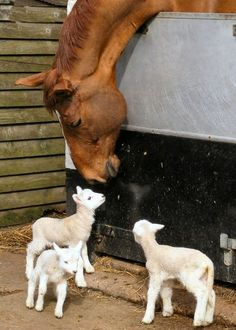 Country Living ~ Making friends
