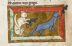Grey and white cat hunting mice, advice from the Middle Ages on pet care