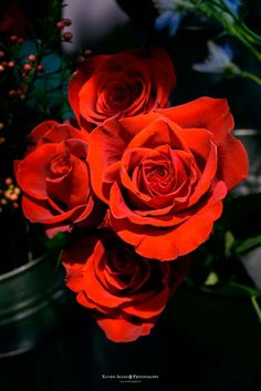 Roses  Floristeria Flor Apunt C/Plaça del vi, 5 17004, Girona