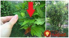 Zhodou okolností sme mali zapnutú jednu reláciu na českej televízii, kde sa o tejto téme práve hovorilo. Vošky sú tento rok doslova ako mor, všade a vo veľkom. Thing 1, Garden Inspiration, Herbs, Gardening, Lawn And Garden, Herb, Spice, Horticulture, Square Foot Gardening