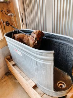 dog rooms Are you a dog lover Need to wash your dogs somewhere else other than your shower Here is an easy guide amp; everything you need to how to make our DIY Dog Wash Station we have in the barn! Diy Dog Wash, Diy Pet, Dog Washing Station, Dog Station, Dog Feeding Station, Dog Rooms, Dog Life, Dog Lovers, Dog Cat