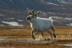 Photographer Dennis Binda – wildlife {Part 2}