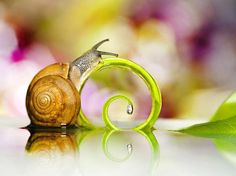 snail with fern and water