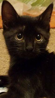 Kitty, Cats, Animals, Black, Gatos, Animais, Animales, Black People, Animaux