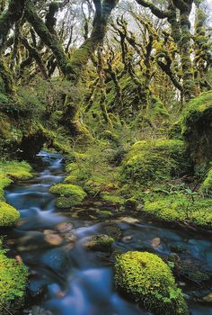 The jungle in New Zealand looks like a fairy tail forrest.