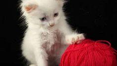 Enlever les poils de chats