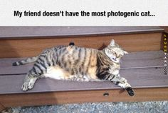 28 Funny Pictures Of The Day