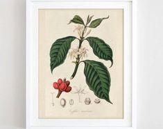 28 Marvelous Coffee Creamers Liquid Pump Coffee Creamer In Prime Pantry Botanical Wall Art, Botanical Prints, Home Wall Art, Wall Art Decor, Coffee Wall Art, Coffee Plant, Nature Prints, Kitchen Art, Kitchen Decor