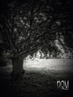 Shaded Tree Black & White Leaves Photo Print by DamnQueMala, $10.00
