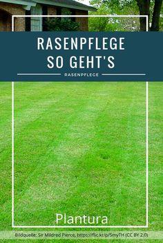 Die Rasenpflege ist schon eine kleine Wissenschaft für sich. Damit Sie sich aber nicht ständig fragen müssen, wann welche Pflegemaßnahme durchgeführt werden muss, haben wir für Sie einen Jahreszeitenplan aufgestellt. Wenn Sie diesen befolgen, wird Ihnen das Gras mit einer wunderbar dichten und grünen Rasenfläche danken.