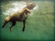 LauraMoss2Dogs Swimming 003