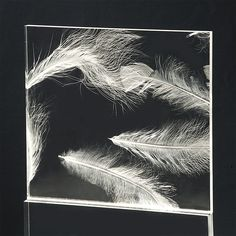 turkey feathers in Acrylic sheets