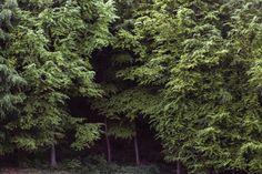 woods ! #nature