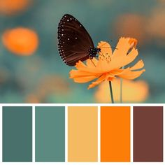 Yellow, orange , sage green color scheme , color palette Source by marilenamatala color schemes Scheme Color, Warm Color Schemes, House Color Schemes, Warm Colors, Color Combinations, Orange Color Schemes, Orange Color Palettes, Color Schemes Colour Palettes, Green Colour Palette