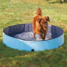 Haley Pet Pool at Joss and Main