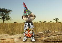 Aleksandr's African Safari Journal   Compare The Meerkat