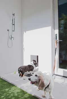 Take it outside. Homeowners are increasingly incorporating pet washing stations into their outdoor showers. All it takes is a handheld spray...