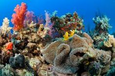 "The term ""coral reef"" generally refers to a marine ecosystem in which the main organisms are corals that house algal symbionts within their tissues. Marine Ecosystem, Ocean Unit, Underwater World, Animals Of The World, Tropical Fish, Science And Nature, Marine Life, Under The Sea, Creatures"