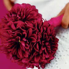 How to grow and arrange a dahlia wedding bouquet - Sunset Mobile Dahlia Wedding Bouquets, Wedding Bouquets Pictures, Tropical Wedding Bouquets, Dahlia Bouquet, Red Wedding Flowers, Wedding Flower Arrangements, Floral Bouquets, Diy Flowers, Magenta Flowers