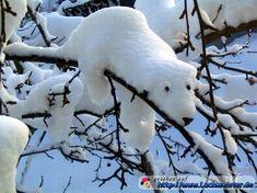 bäume bilder | Eisbär auf dem Baum