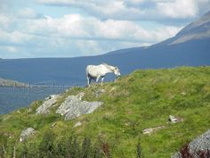 Connemara Pony  11x14 Print  Photography  Home Decor  by NJSimages, $24.00