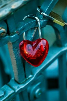 Red and Teal Blue - Heart lock on fence I Love Heart, Key To My Heart, Happy Heart, My Love, Heart Pictures, Heart Images, Images Of Love Hearts, Beautiful Pictures, Heart In Nature