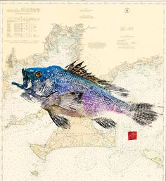 Learn about gyotaku, the Japanese art of fish printing, and how one kayak fisherman is using gyotaku to create pretty fish prints.