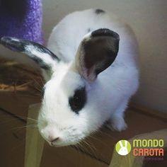 LAURIENN CERCA FAMIGLIA  Per info scrivete a adozioni@mondocarota.it _____ #bunnylove #rabbits #pet #animallover #adoptdontshop #petsofinstagram #instabunny #adoption #rabbits_of_ig #rabbitgram #adorable #instarabbit #rabbit #bunnygram #pets #cute #animal #pets_of_instagram #bunny #animals #bunnies #petstagram #rabbitsofinstagram #petsagram